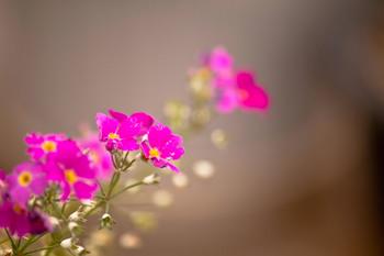 小花ピンクのjpg.jpg