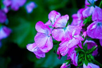 花紫の.jpg
