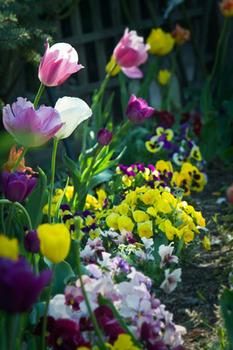 草花花壇の.jpg