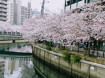8大岡川.jpg